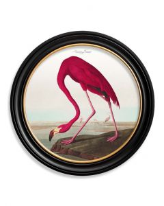C1838 American Flamingo  in Round Frame