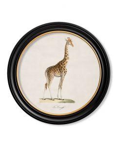 C1836 Giraffe in Round Frame