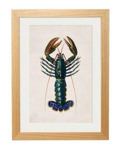 C1876 Crayfish