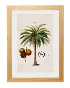 C1843 Macaw Palm