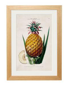 C1843 Pineapple